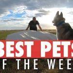 Best Pets of the Week   July 2018 Week 2
