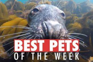 Best-Pets-of-the-Week-July-2018-Week-3