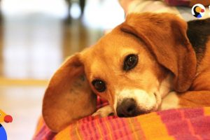 Dog-Rescued-From-Lab-Reunites-with-Old-Friend-The-Dodo
