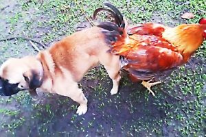 FUNNIEST-SITUATIONS-WITH-ANIMALS