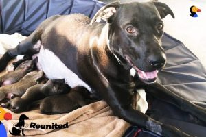 Mother-Dog-Reunited-With-Her-Puppies-All-Grown-Up-The-Dodo-Reunited