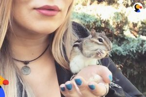 Wild-Chipmunk-Chooses-Nicest-Lady-To-Be-His-New-BFF-VAN-GOGH-The-Dodo