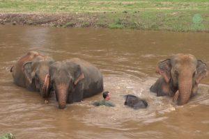 Amazing Elephant Friendship
