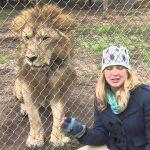 Interviewing a Lion