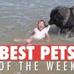 Best Pets of the Week | August 2018 Week 3