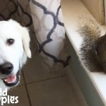 Dogs Love Playing with Squirrel Sibling Rescued From Hurricane
