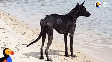 Man-On-Cruise-Finds-Dog-On-Deserted-Island-and-Rescues-Her-The-Dodo