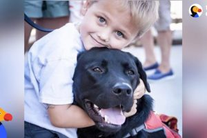 Amazing Dog Changes Everything For Boy With Diabetes