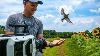 Bird Taking Off at 20,000 fps (213 milliseconds)