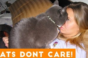 Cats Don't Care Funny Pets Videos