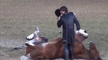 Funniest Horse Act Ever!