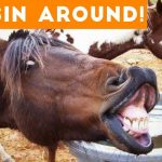 Funniest Horse Videos of 2018 Weekly Compilation