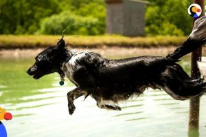 Dog-Sprints-and-Jumps-Into-Water-Every-Chance-He-Gets-The-Dodo