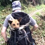 Guys Hike For Hours To Save Dog When Everyone Said It Couldn't Be Done