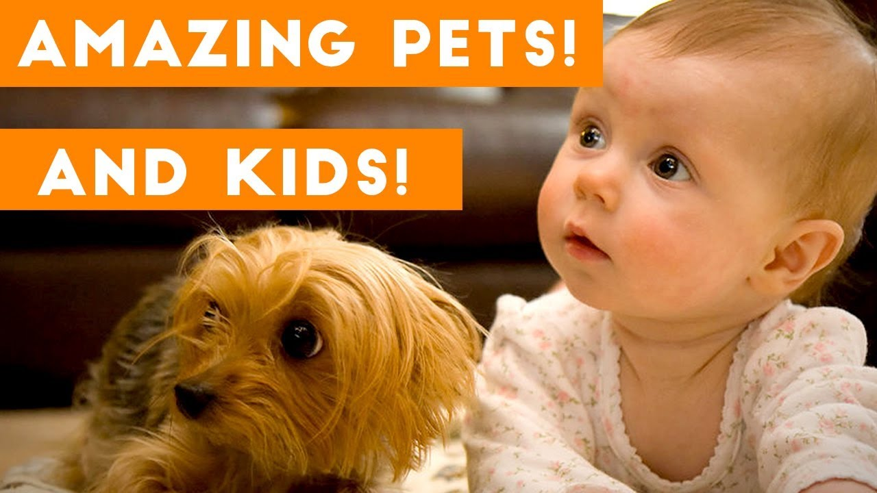 most amazing 1 hour of cute kids and pets 2018 – 1funny