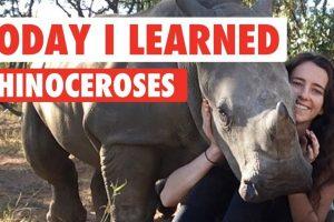 Today-I-Learned-Rhinoceroses