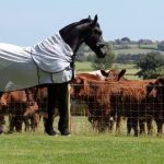 Elegant Friesian Horse Meets the Neighbours Cows