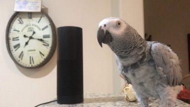 Smartest Most Conversational Parrot Ever