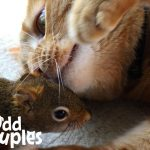 Cat Is SO Gentle With His Squirrel Brother