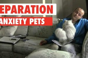 Separation-Anxiety-Pets
