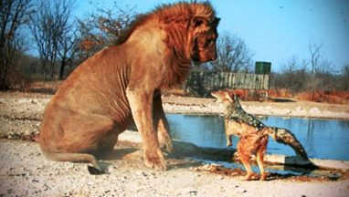 12 Most Fearless Animals