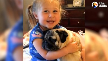 Little-Girl-Says-The-Funniest-Things-To-Her-Pugs-The-Dodo