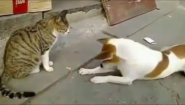 Angry Cats vs. Dogs