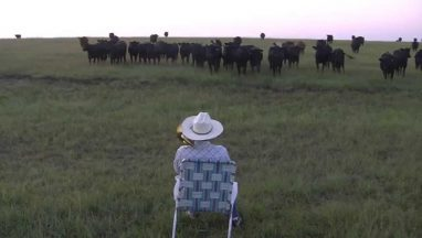 Serenading the Cattle With a Trombone