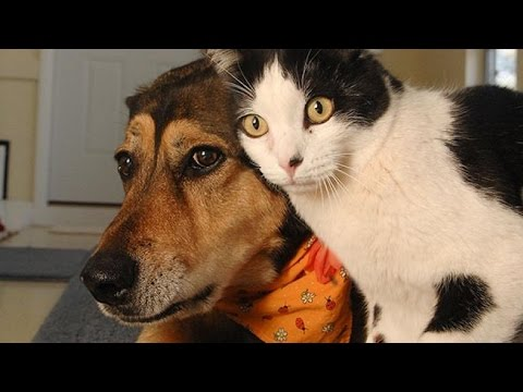 healthy pets and animal