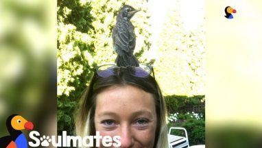 Woman Rescues a Baby Robin and Becomes His Best Friend