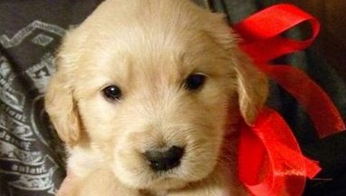 Christmas Puppy Surprise Compilation