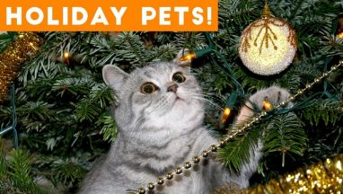 Cutest Holiday Pets Compilation