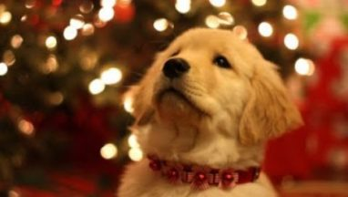 Top 7 Cute & Funny Christmas Commercials of the Year