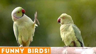 Funny Parrot & Bird Video Compilation