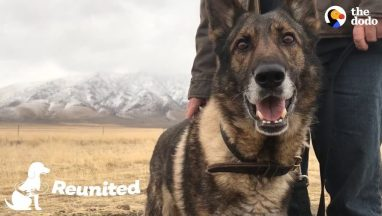 Military Dog Is SO Happy To Finally Be Home With His Dad