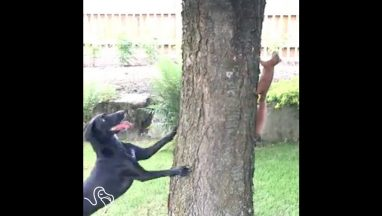 Squirrel Knows Exactly How To Outsmart This Dog