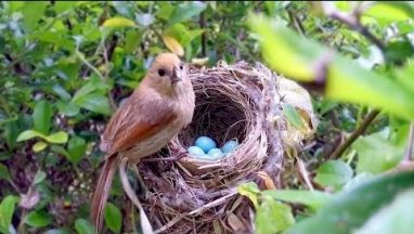 Bird Hatching and Brooding