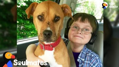 Boy And Rescue Dog Have The Most Remarkable Bond