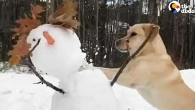 Dog Really HATES Snowmen