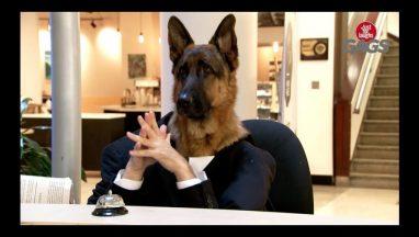 Dog Working at the Information Desk