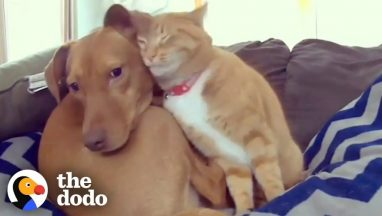 Hidden Camera Catches Cat Comforting Anxious Dog While Family's Away