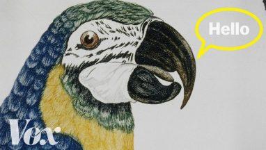 How Do Parrots Talk Like Us?