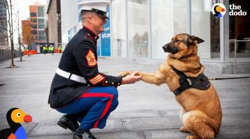 Dogs Reuniting With Soldiers