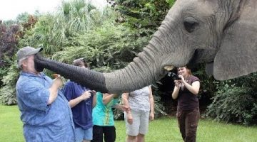 Funny Elephants Having Fun With Humans