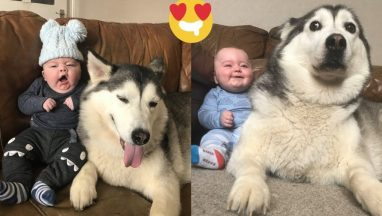 Husky and Baby Are Best Friend for Life
