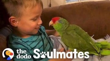 Parrot Follows Her Favorite Kid Everywhere