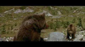 Cougar vs. Bear Cub