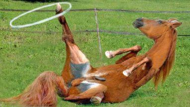 Cute & Funny Horse Videos