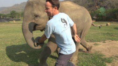 Elephant Came to Say Hello