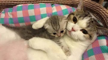 Mother Cats and Their Cute Kittens